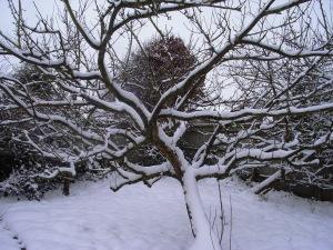 snow 2013 15